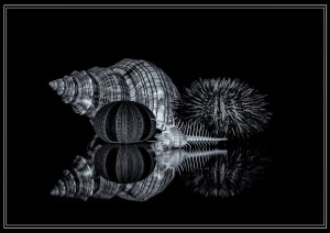 Still Life With Shells – Morag Reid won the 2nd Place position in our 2016 Print Salon Competition in the Black & White category held in October.