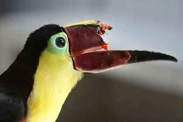 Impressão 3D salva vida dos Animais