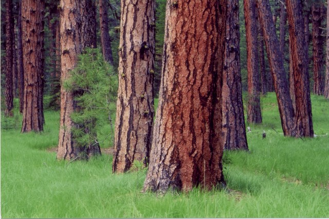 LWV Oregon New Position on Forests