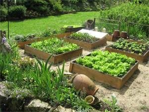 21-05-2017- Projet jardin et appel à solidarités