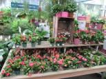 jardin17