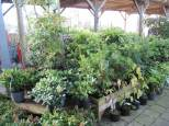 jardin29