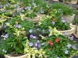 Jardinières
