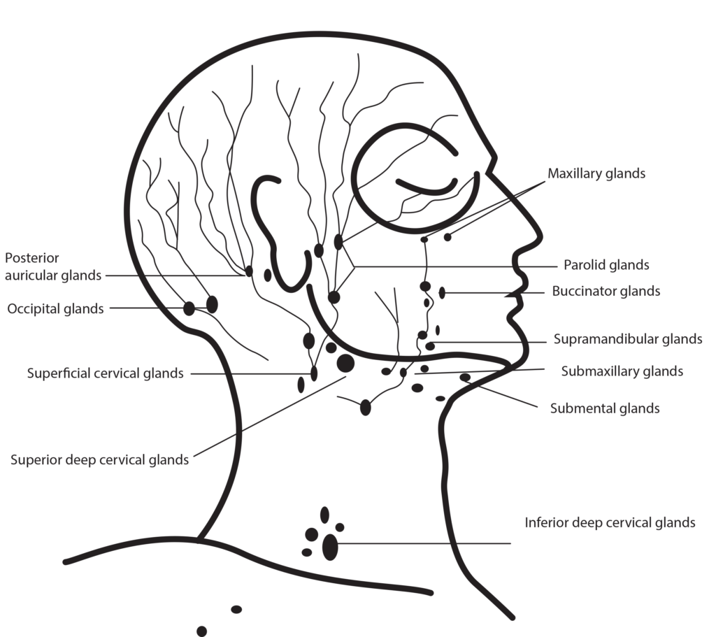 How To Perform Facial Massage Facial Massage Benefits