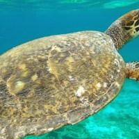 Gili Meno. Spóźnialscy będą pierwszymi w kolejce po żółwie morskie ;)
