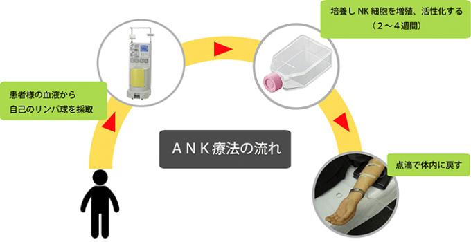 ANK免疫療法の流れ