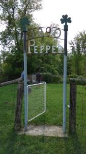 Pepper FArm Cemetery August 2016 (2)