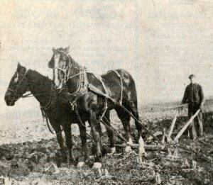 kinch-st-william-j-kinch-plowing-c1930