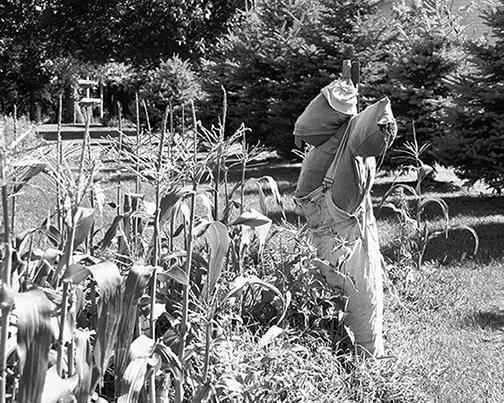 Scarecrow at the garden