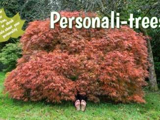 personalitrees-book-lynne-allbutt