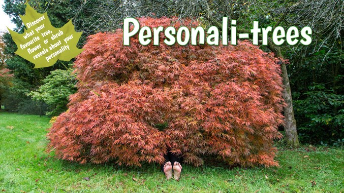 personalitrees-book-lynne-allbutt