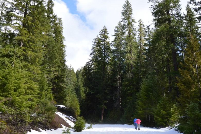 Oregon March 2016 // lynnepetre.com