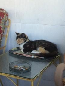 and kitties