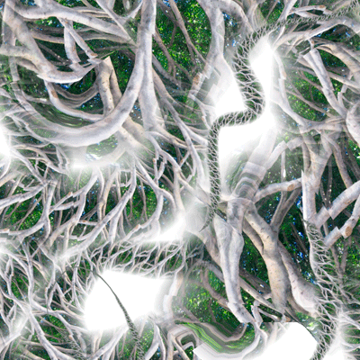 Roots Detail
