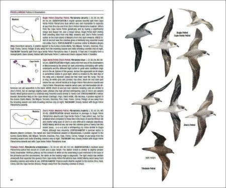 Field Guide to the Birds of Macaronesia sample page