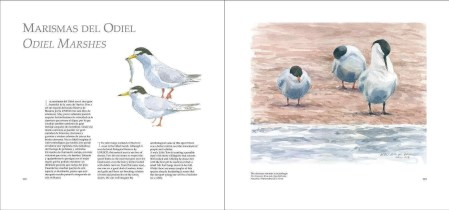 Entre Mar y Tierra / Between Sea and Land sample page