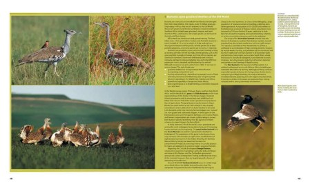 Farmland Birds across the World sample page