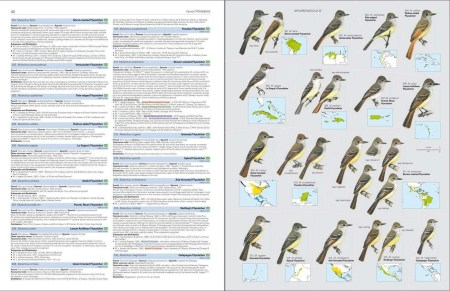 HBW and BirdLife International Illustrated Checklist of the Birds of the World. Volume 2 sample page