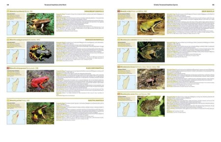 Threatened Amphibians of the World sample page