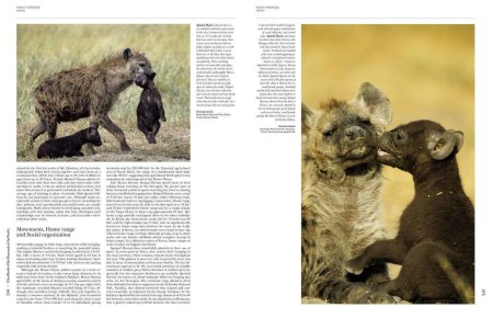 Handbook of the Mammals of the World - Volume 1 sample page