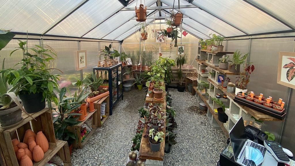 Nicolas Talliu veut offfrie une seconde vie aux plantes