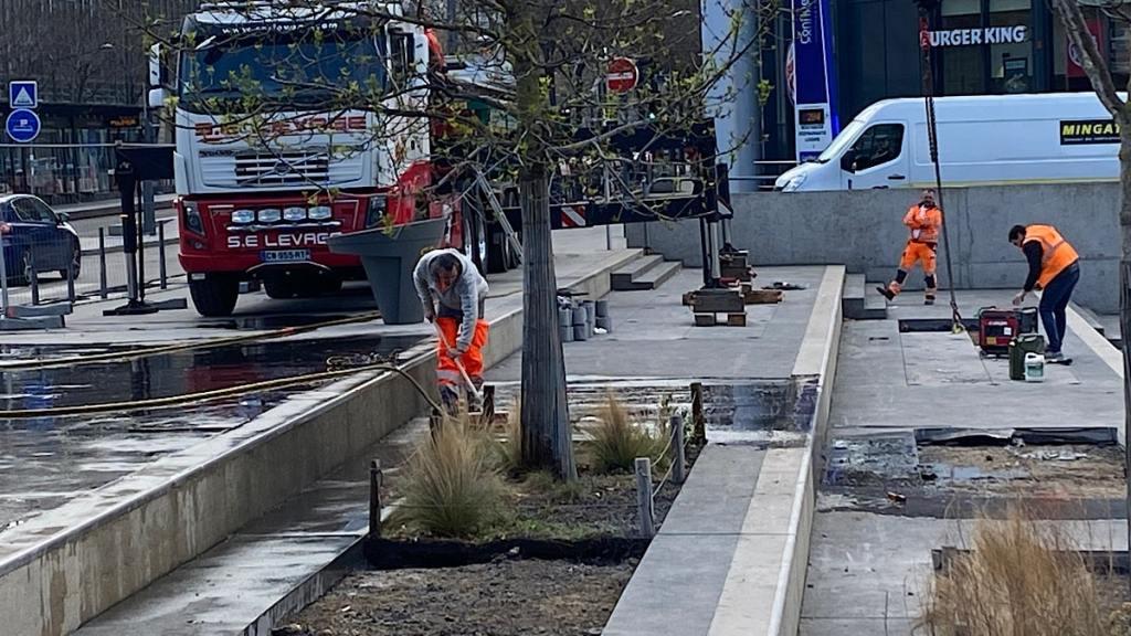 plantation d'arbres à la darse confluence - Lyon Demain