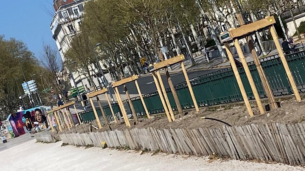 plantations d'arbres quai Sarrail - Lyon Demain
