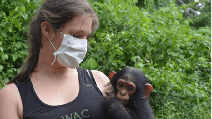 Amandine Renaud avec un chimpanzé recueilli par P-WAC
