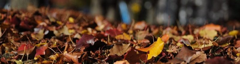 Make the most out of autumn to get your home ready to sell