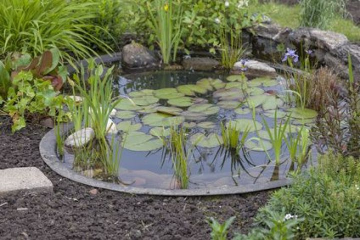 construction d un bassin de jardin