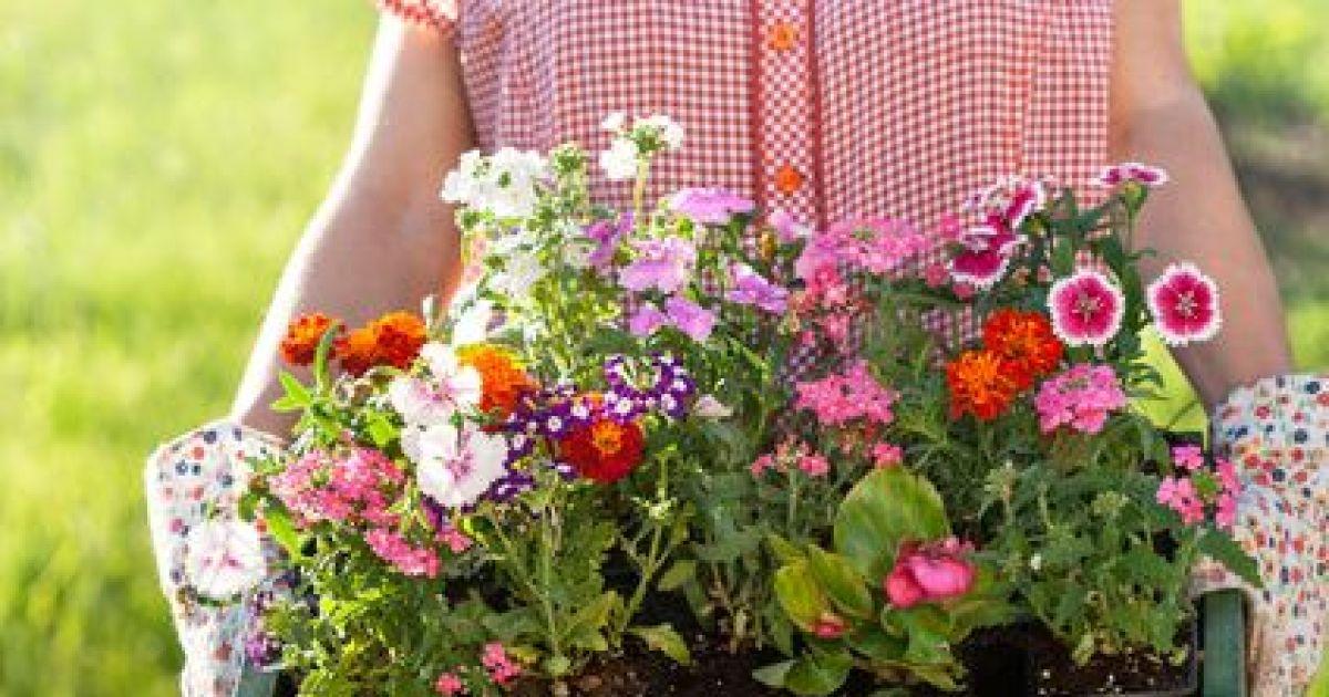 Quelles Fleurs Peut On Mettre En Jardinire