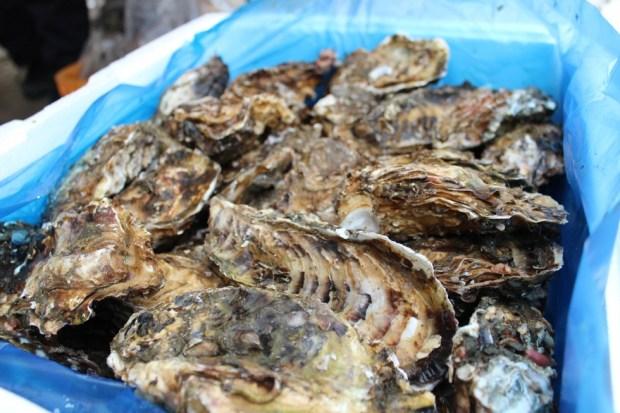 志津川湾春つげ牡蠣まつり福興市
