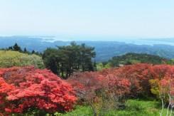 田束山頂からの景色は志津川湾が一望できる南三陸屈指のビュースポット