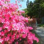 季節の花々に出会う