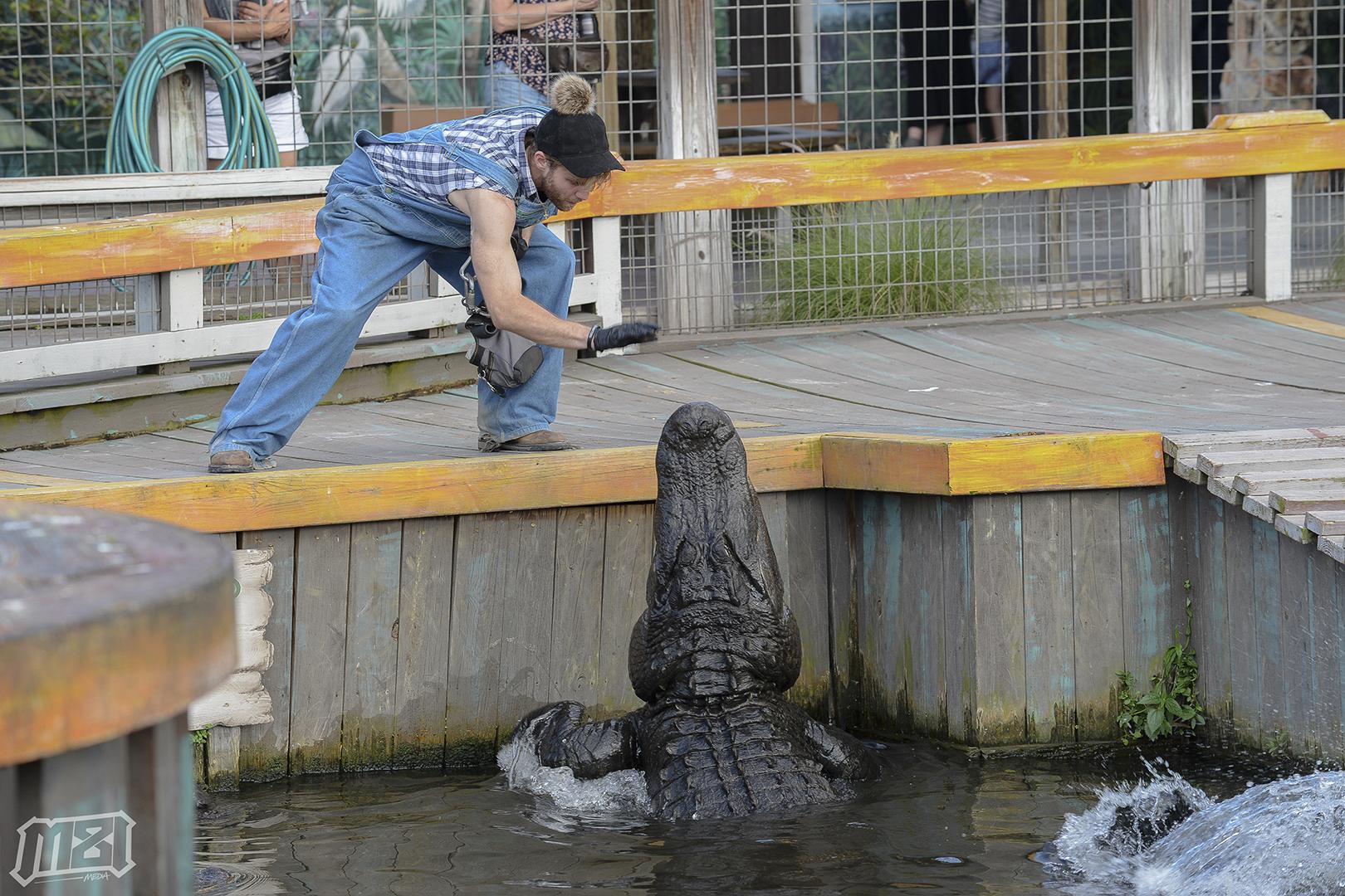 Big Boy Gator Jump