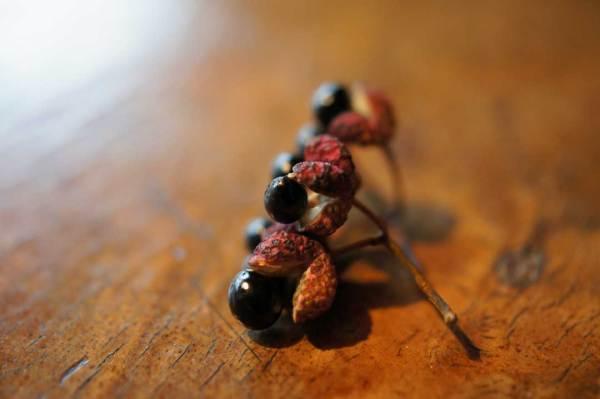 Sichuanpfeffer getrocknet, noch mit Samen