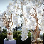 Fleurs de mariage : l'orchidée