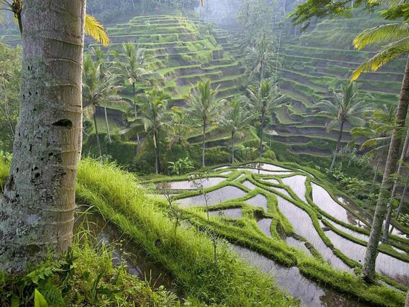 rizières-bali-voyage-de-noce