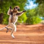 Partir en voyage de noces à Madagascar