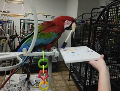 Photo of Apollo, Green-Winged Macaw, Creating Painting 2016-03