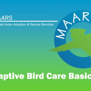 Slide from the MAARS Bird Care Class