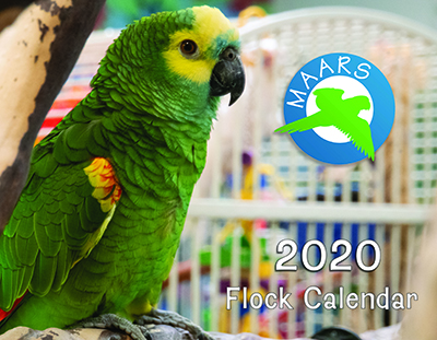 2020 MAARS calendar cover, featuring a Blue-Fronted Amazon named Prince Charming along with the MAARS Logo