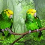 Two Double Yellow-Headed Amazons, sitting on a tree branch in front of a photo backdrop of a plush green forest.