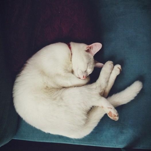 Lieve slapende Dobby.