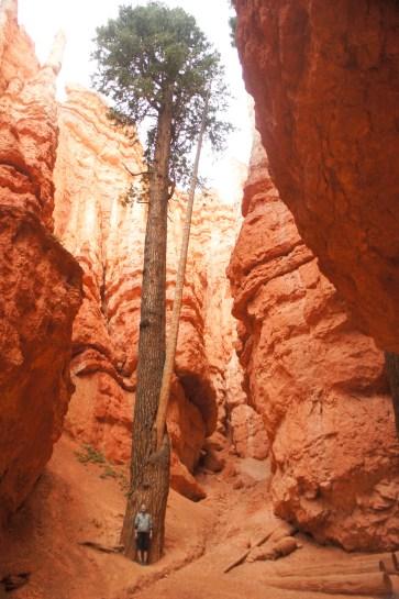Bryce canyon utah 18