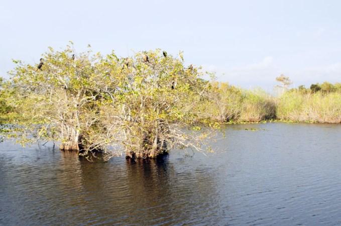 Anhinga Trail, Everglades, Florida