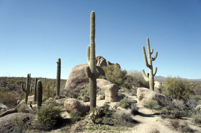 Dans le désert en Arizona