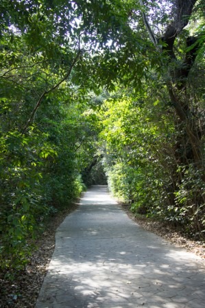 Hammock - Coconut Grove - Miami - Floride