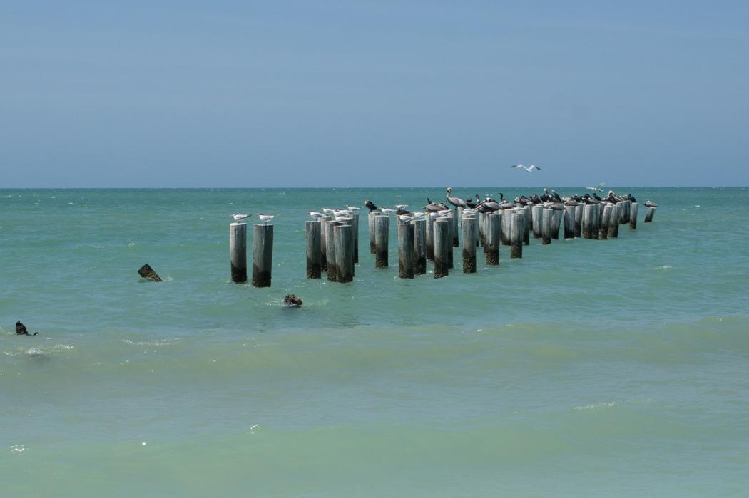 Naples, Floride - la plage - les oiseaux