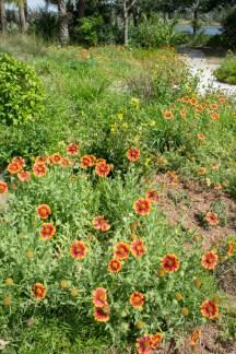 Fleurs - Naples Botanical Garden - Floride